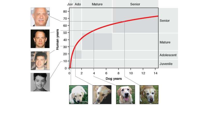 How old is your dog in human years? Scientists develop better method than 'multiply by 7'