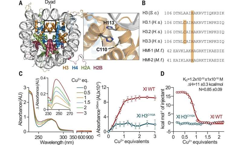 Histone H3-H4 tetramer found to be a copper reductase enzyme