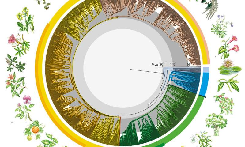 """New global study reveals """"time tree"""" of Earth's flowering plants"""