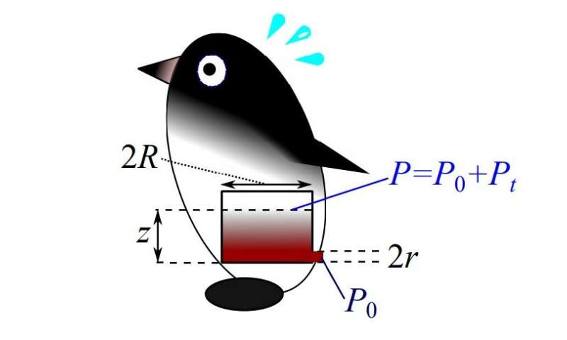 Calculating the true pressure required to propel penguin feces