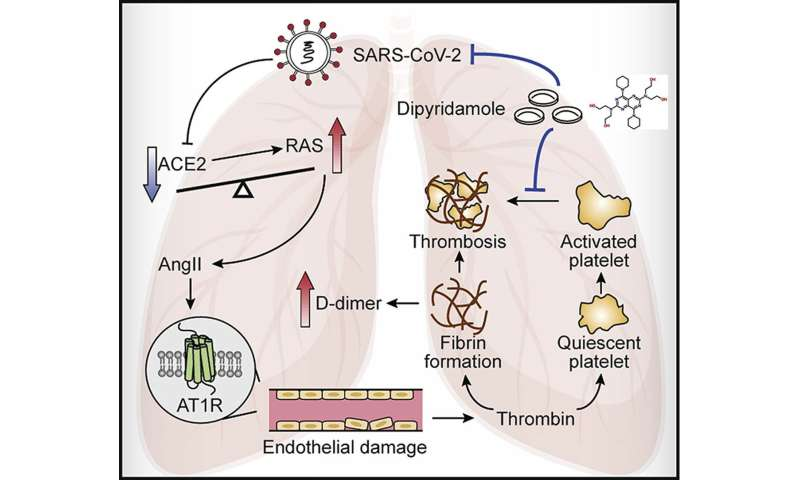 Potential Therapeutic Effects of Dipyridamole in the severely ill patients with COVID-19