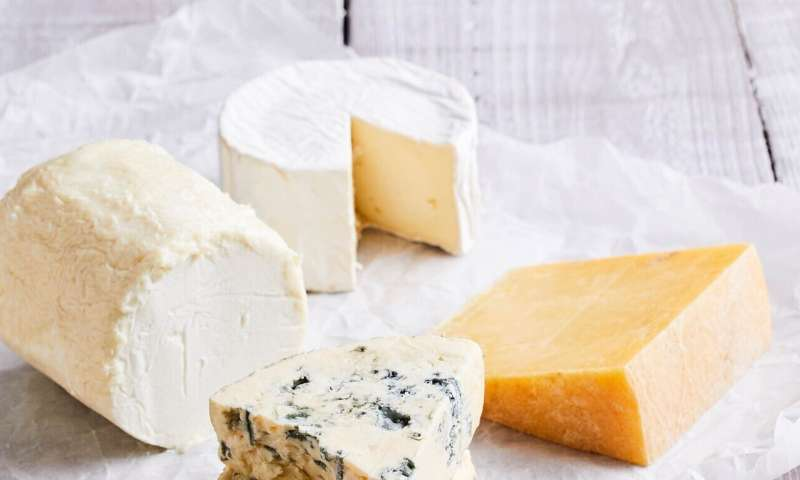 Cheese – new insights into an age-old food
