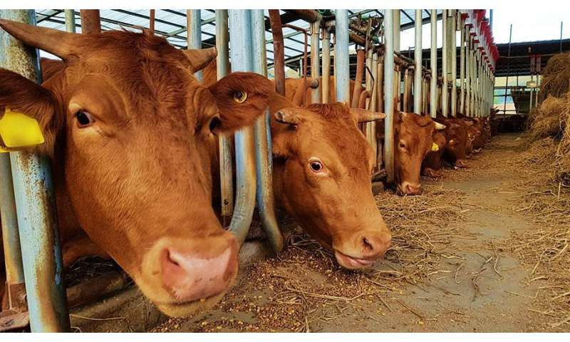 Raising livestock — answer to crop residue burning