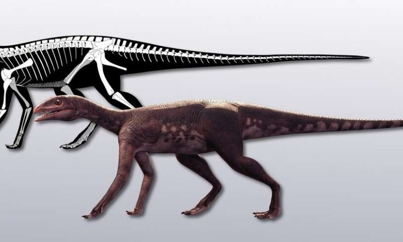 Sacisaurus helps to fill the hole in the evolution of ornithischians