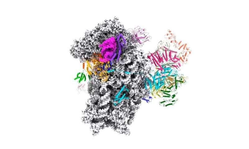 Start here to make a protein: Structure of mRNA initiation complex could give insight into cancer and other diseases