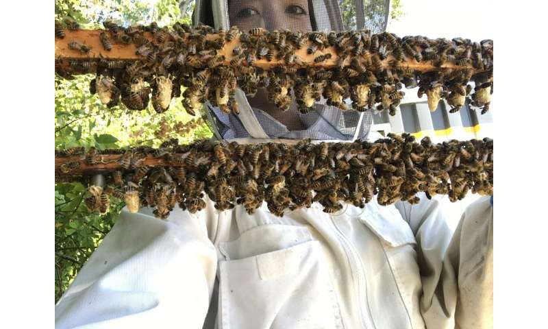 Scientists find clues to queen bee failure