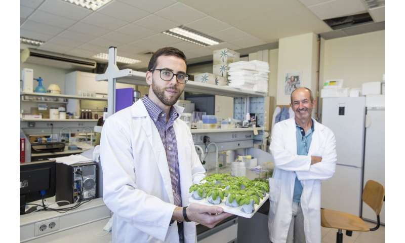 Improving the resistance of crops to combined climatic stresses