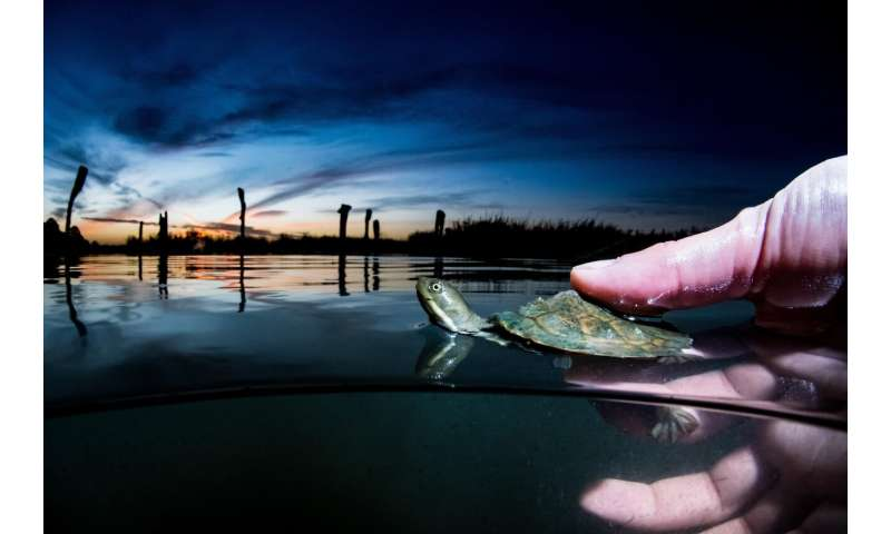 Freshwater biology: Turtle scavenging critical to freshwater ecosystem health