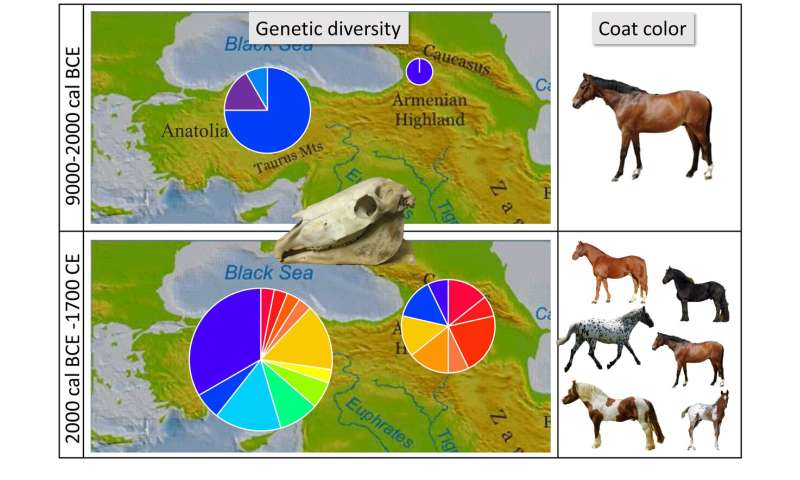 Genetic testing suggests horse domestication did not begin in Anatolia