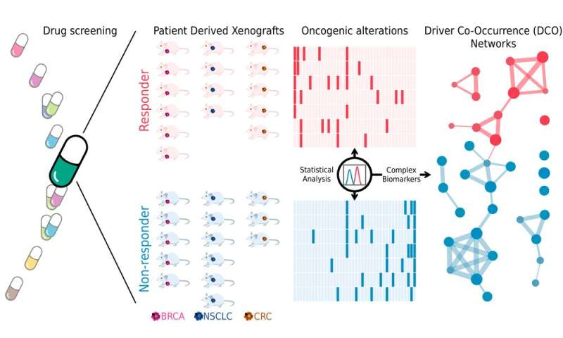 The co-occurrence of cancer driver genes, key to precision medicine