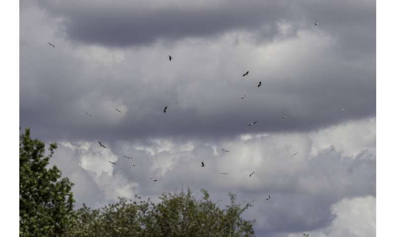 Tracking of UK white storks reveals new migratory routes and strategies