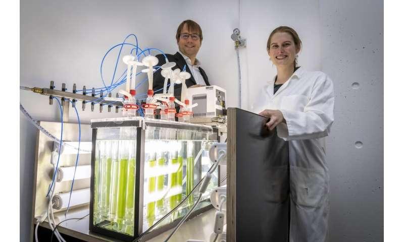"Cyanobacteria as ""green"" catalysts in biotechnology"