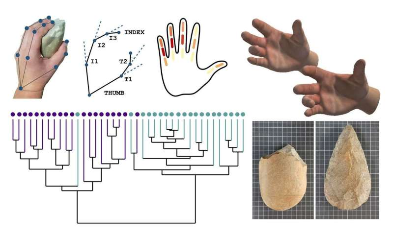 A study analyzes the ergonomic relationship between hand and Lower Paleolithic tools