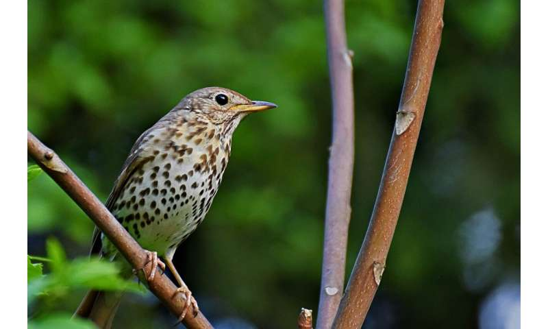 A tale of two seasons: climate drives winter migration in birds but not the return to breeding sites