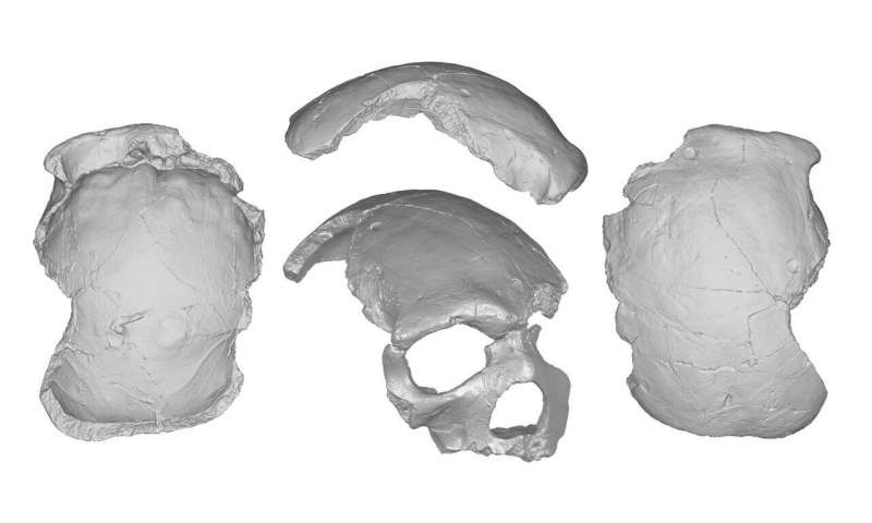 The traits of Florisbad skull reinforce the mosaic hypothesis of human evolution