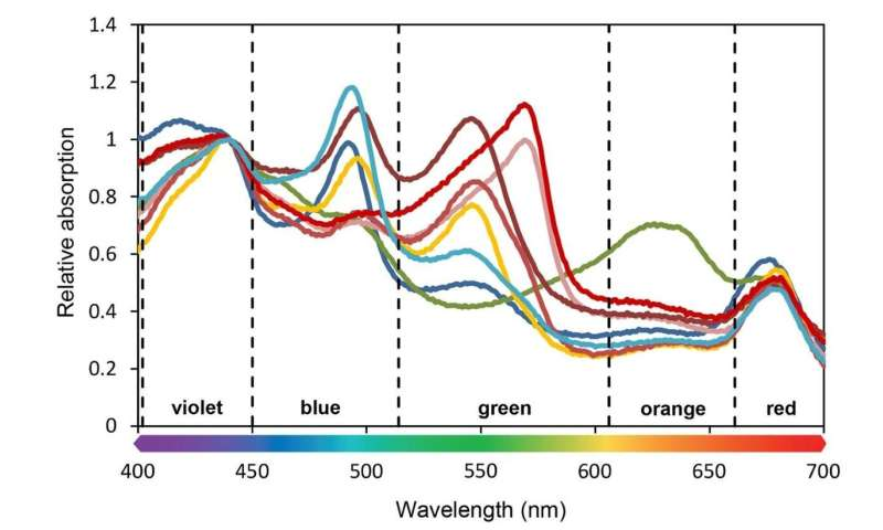 Molecular vibrations of water predict global distributions of photosynthetic organisms in lakes and oceans