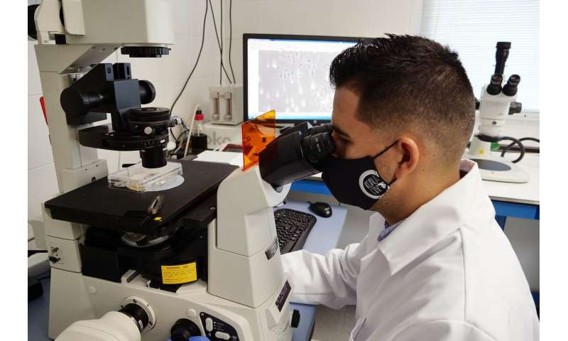 Researchers generate a brain cell type crucial to support neural activity