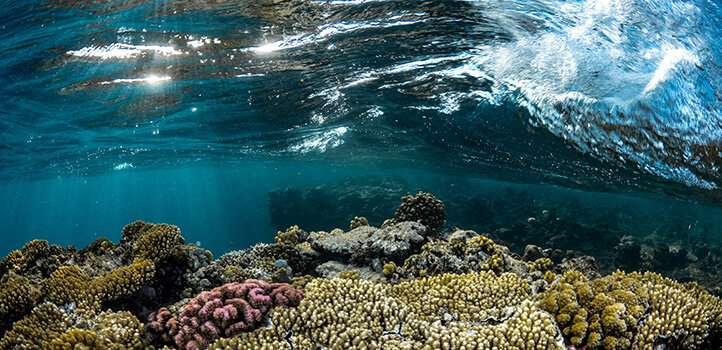 A sweeping climate model of the Red Sea
