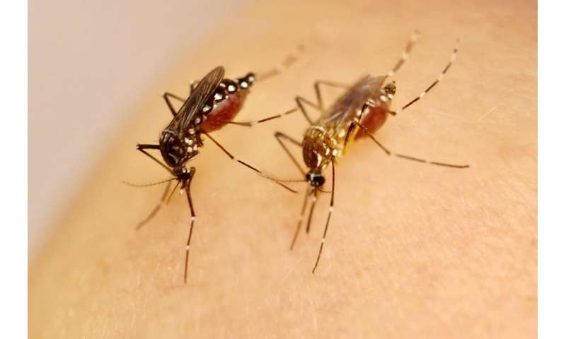 Greater mosquito susceptibility to Zika virus fueled the epidemic