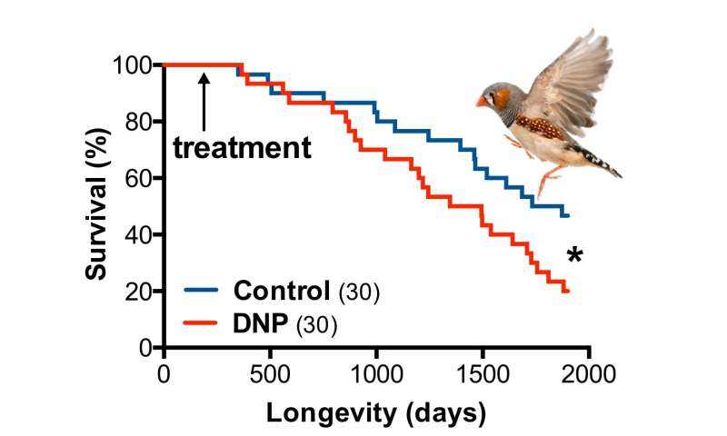 Listen to the birds: illegal diet pill DNP might kill you on the long run