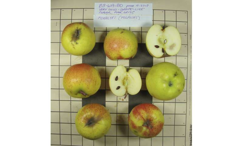 10 pioneer-era apple types thought extinct found in US West