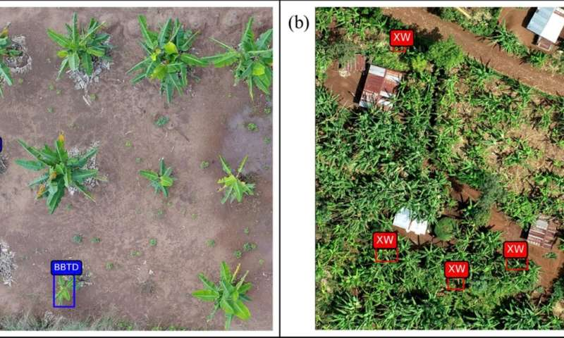 Aerial images detect and track food security threats for millions of African farmers