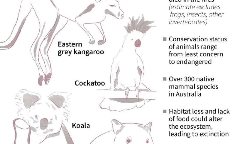 Australia's bushfire wildlife loss