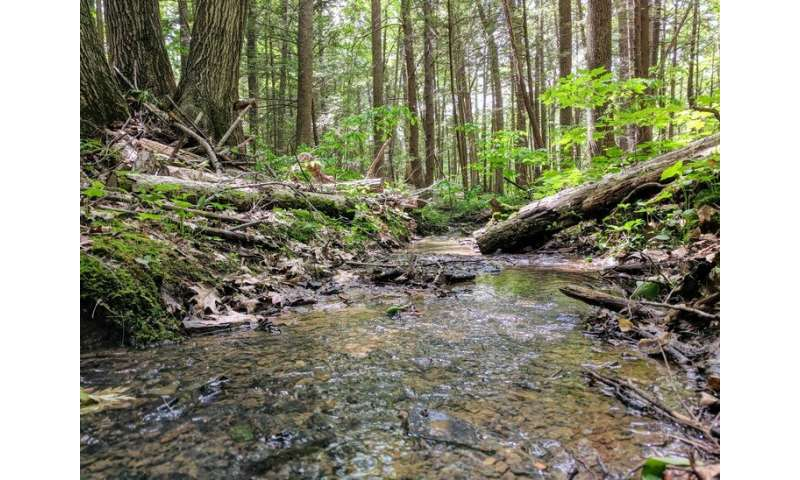 Forest soils release more carbon dioxide than expected in rainy season