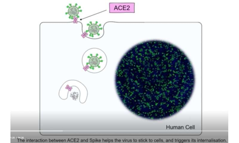 New understanding of the neuropilin-1 protein could speed COVID vaccine research – MedLancr