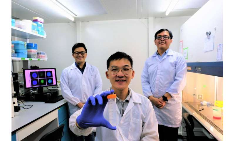 NTU Singapore scientists devise 'Trojan horse' approach to kill cancer cells without using drugs