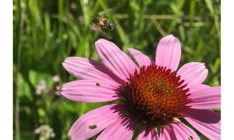 Research brief: Bee neighborly -- sharing bees helps more farmers