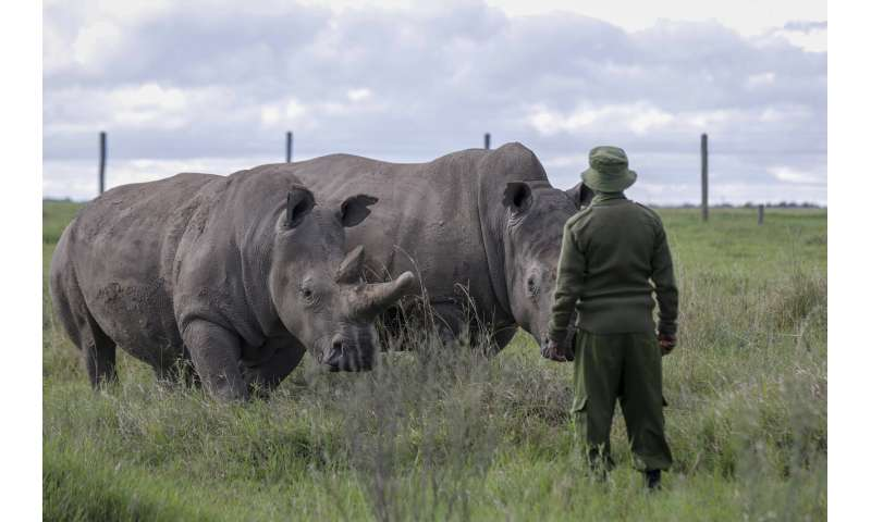 Virus stalls work to keep alive a rare rhino subspecies