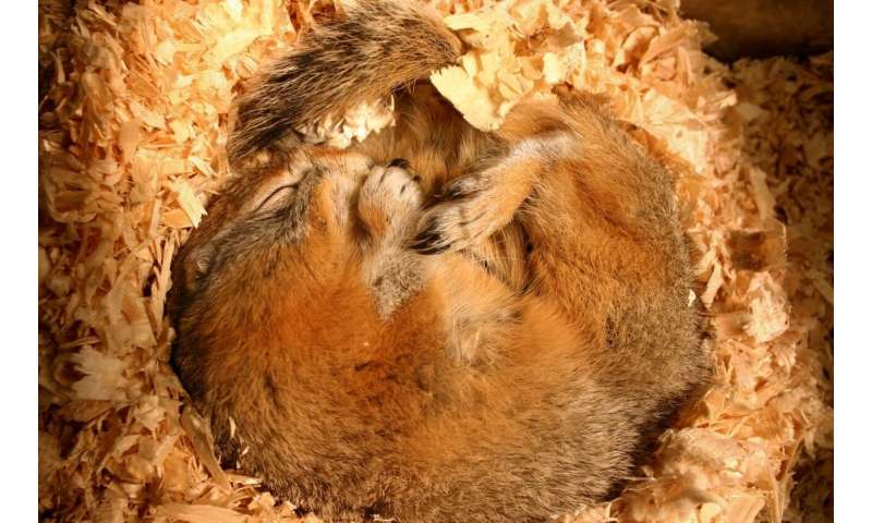 Study reveals element in blood is part of human--and hibernating squirrel--stress response