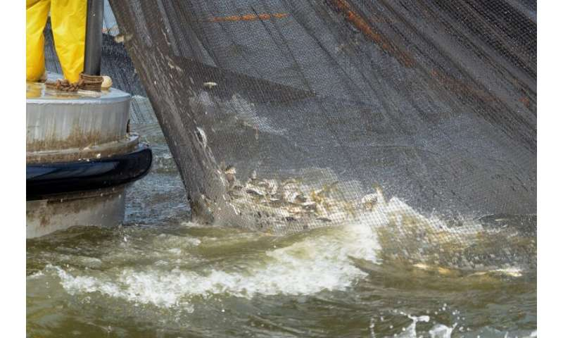 Research reveals strongest predictors of menhaden growth in the Gulf of Mexico and the Atlantic
