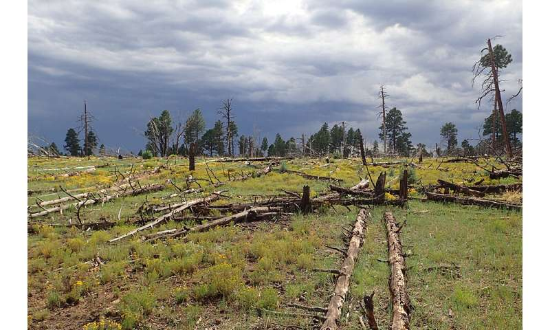 Study reveals patterns that shape forest recovery after wildfires