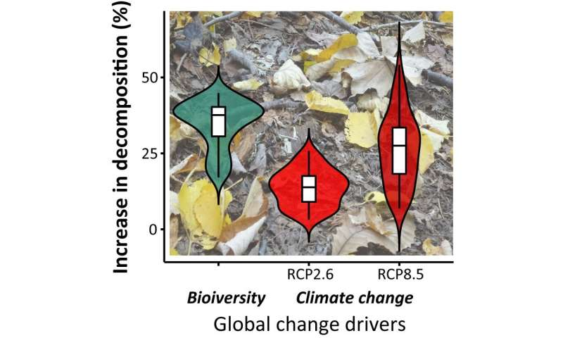 Biodiversity increases plant decomposition rate; should be factored into climate models, study finds