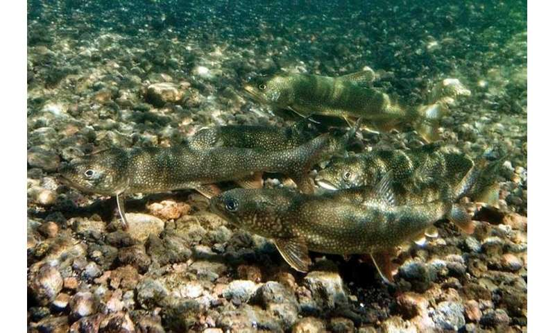 New study reveals what fish are up to under the ice