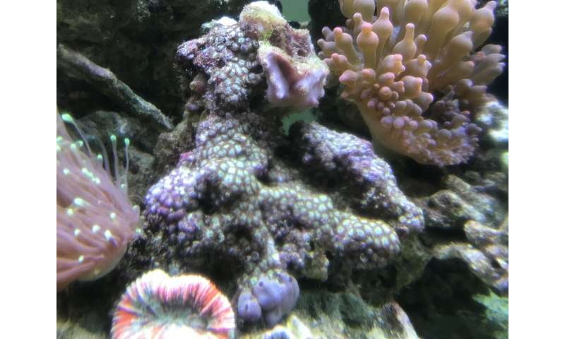 Research shows microplastics are damaging to coral ecosystems
