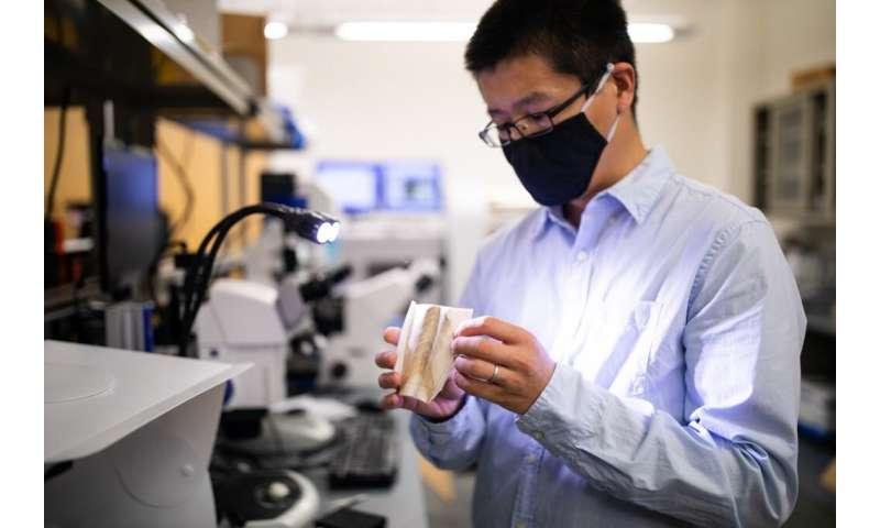 Researchers find cuttlebone's microstructure sits at a 'sweet spot'