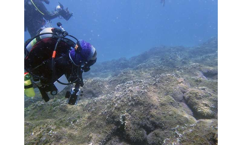 Aggressive seaweed smothers one of world's most remote reefs