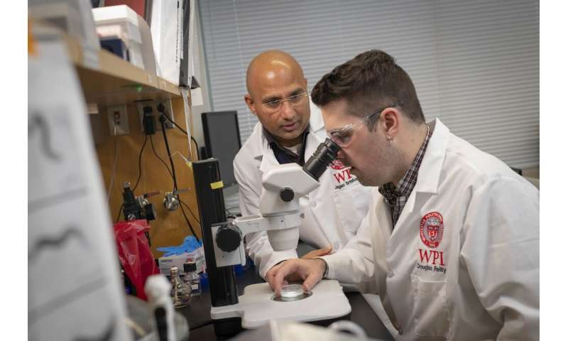 Researchers develop tool to identify molecular receptors in worms