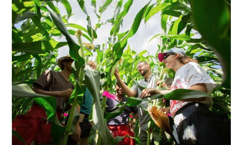 Researchers uncover the genetics of how corn can adapt faster to new climates
