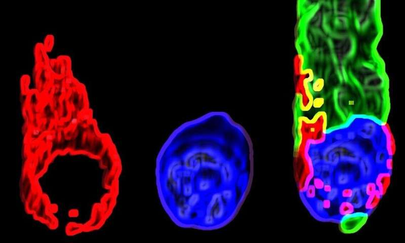 Scientists at Tel Aviv University develop new gene therapy for deafness