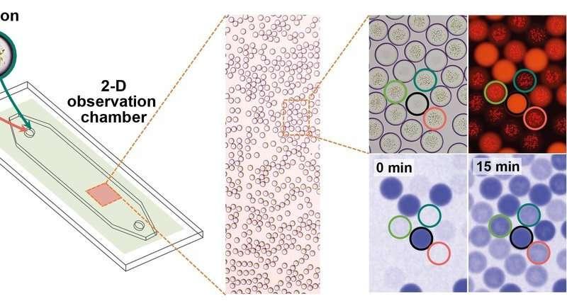 """Los investigadores desarrollan un """"cloroplasto artificial"""""""