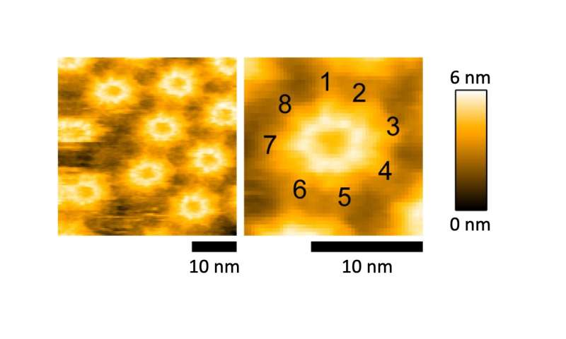 A bacterial toxin turning cells into swiss cheese