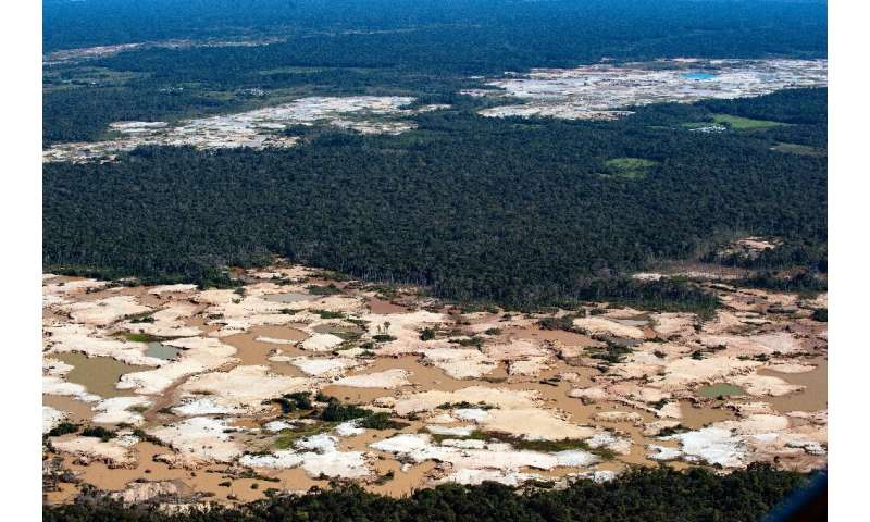 About 20 percent of the Amazon basin rainforest has been wiped out since 1970