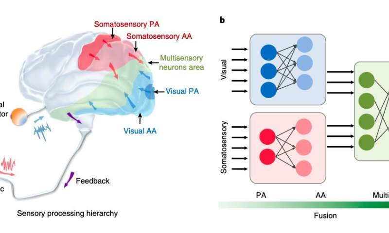 A brain-inspired architecture for human gesture recognition