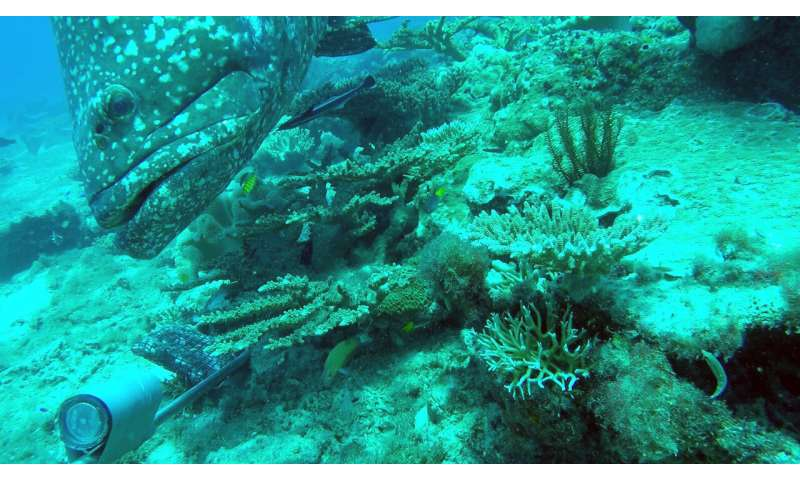 Abundant corals and fishes emerge from the ancient contours of Arafura Marine Park