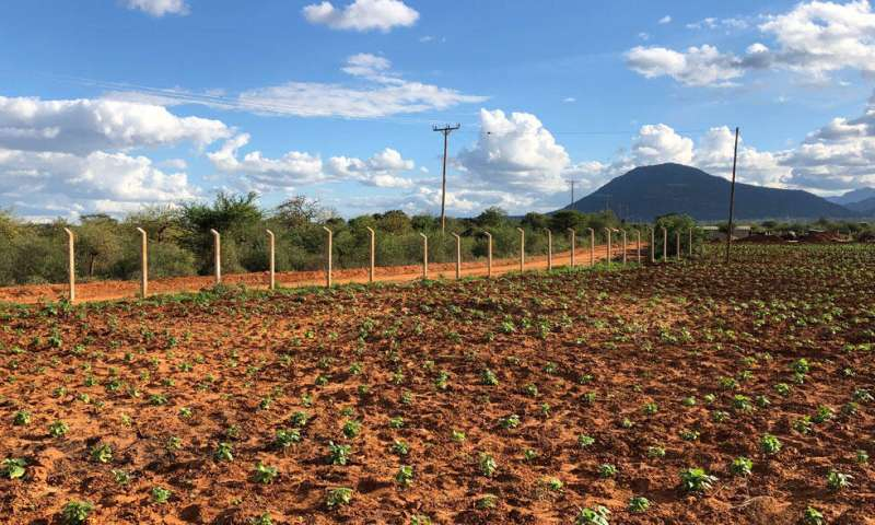 Acacia bushlands prevent climate warming in Eastern Africa