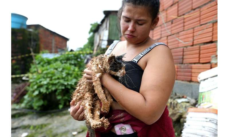 A cat rescued from a landslide in the Morro do Macaco Molhado favela in the coastal city of Guaruja, Sao Paulo